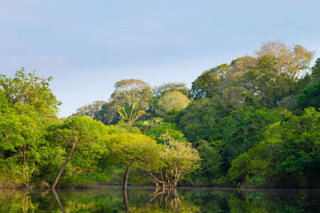 Foto per Panorama from Amazon rainforest, Brazilian wetland region. Navigable lagoon. South America landmark. Amazonia - Immagine Royalty Free