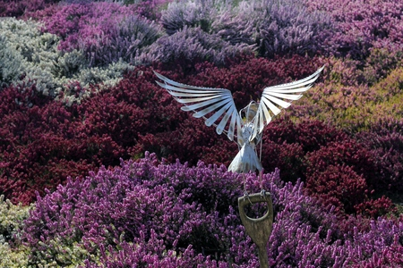 HARROGATE YORKSHIRE MARCH 25th 2017. Metal owl sculpture amongst field of heathers in the RHS Harlow Carr gardens on a warm spring day