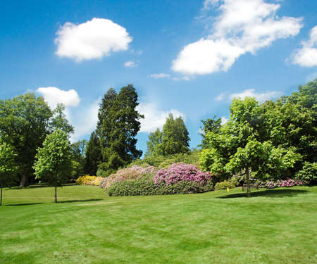 Photo pour Trees and lawn on a bright summer day - image libre de droit