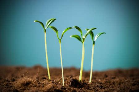 Photo pour Green seedling illustrating concept of new life - image libre de droit