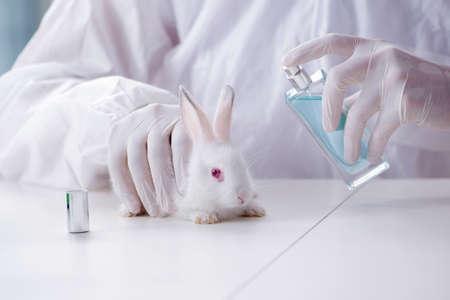 Photo pour White rabbit in scientific lab experiment - image libre de droit