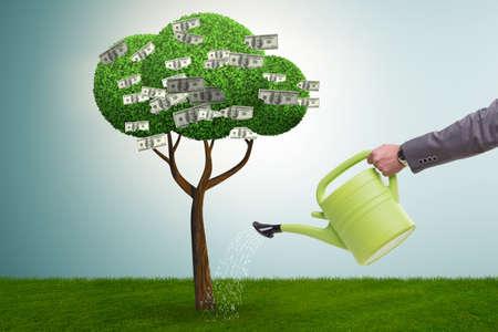 Photo pour Businessman watering money tree in investment concept - image libre de droit