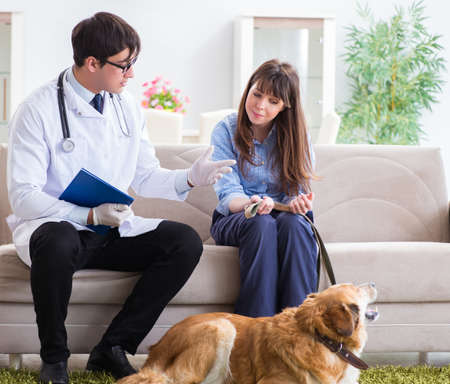 Photo for Vet doctor visiting golden retriever dog at home - Royalty Free Image