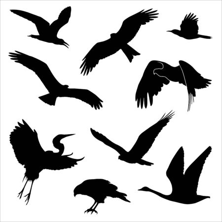 Illustration pour Vector silhouettes of different birds isolated on white - image libre de droit