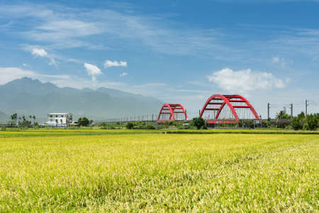 Photo pour Rural scenery with golden paddy rice farm in Hualien, Taiwan, Asia. - image libre de droit