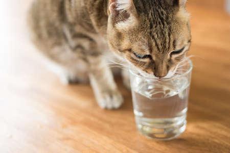Foto de cat drink water on the table - Imagen libre de derechos