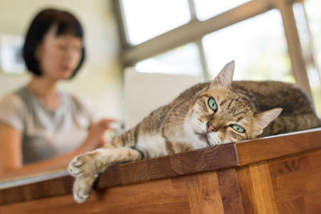 Foto für woman working at home with her cat lying on table - Lizenzfreies Bild