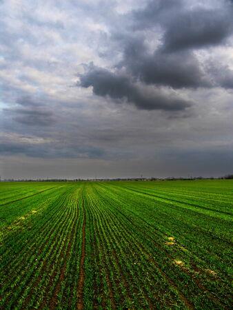 Field on BuroÃ…Â¡ by Silver Lake