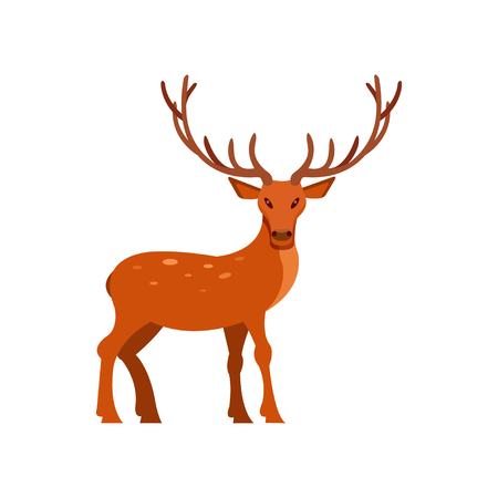 Brown spotted deer with antlers standing, wild animal cartoon vector Illustration on a white background