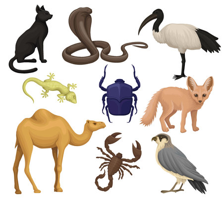 Illustration for Detailed flat vector set of various Egyptian animals, birds and insects. Ibis, fennec fox, scarab beetle, small-spotted lizard. African wildlife - Royalty Free Image