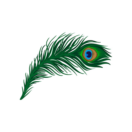 Illustration pour Long emerald-green feather of peacock. Plumage of beautiful wild bird. Detailed flat vector element for poster, book or print - image libre de droit