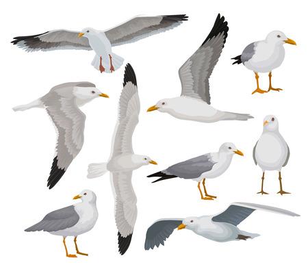 Ilustración de Beautiful seagull set, gray and white sea bird in different poses vector Illustrations on a white background - Imagen libre de derechos