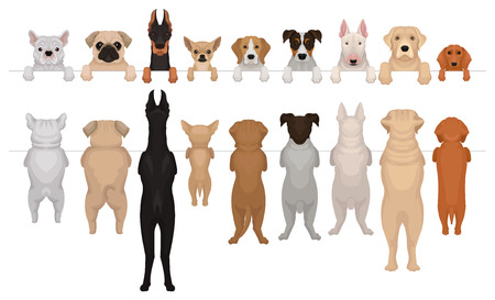Illustration pour Set of dogs of different breeds hanging on border. Portraits of muzzles with paws peeking out from fence and full bodies. Front and back view. Isolated flat vector elements for advertising banner. - image libre de droit