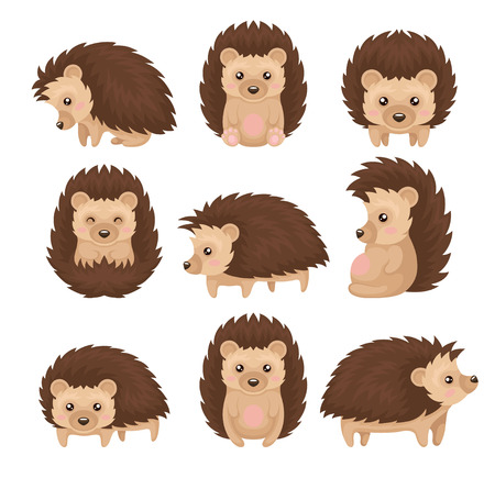 Illustration pour Cute hedgehog in various poses set, prickly animal cartoon character with funny face vector Illustration isolated on a white background. - image libre de droit