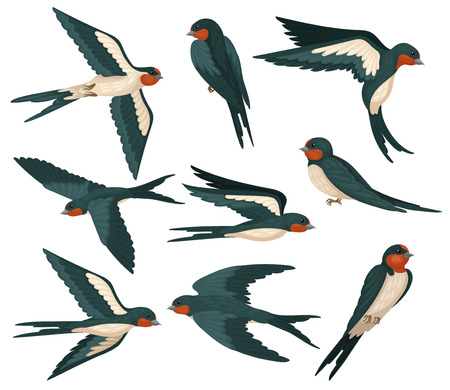 Illustration pour Flying swallow birds in various views set, flock of birds with colored plumage vector Illustration on a white background - image libre de droit
