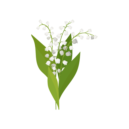 Illustration pour Lily of the valley with green leaves. Colorful spring bouquet. Nature theme. Graphic element for botanical poster or book. Detailed vector illustration in flat style isolated on white background. - image libre de droit