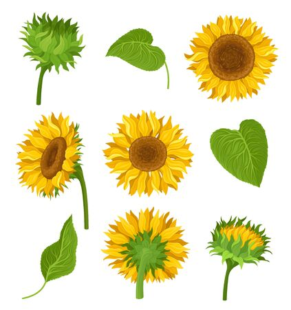 Illustration for Set of illustration with sunflowers, their elements and different details. Yellow flowers, green leaves and stems, kinds of decoration with many compositions. Bright colors. cartoon illustration, isolated on white background. - Royalty Free Image