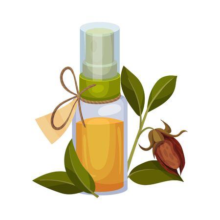Illustration pour Jojoba Oil Bottle with Label and Jojoba Branch Next to It Vector Illustration - image libre de droit