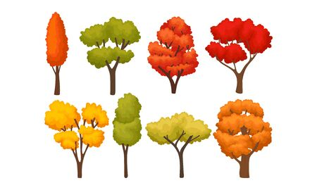 Illustration for Different Autumn Trees with Bright Colorful Foliage Vector Set - Royalty Free Image