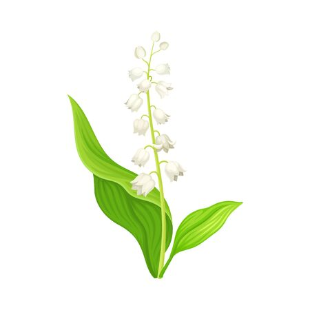 Illustration pour Lily of the Valley with Oblong Leaves and Flowers Vector Illustration - image libre de droit