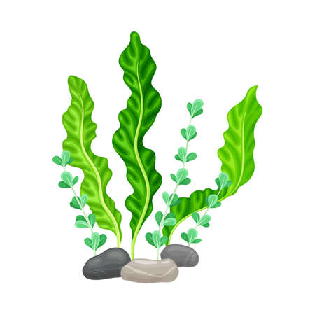 Illustration pour Smooth Pebble or Sea Stones with Seaweeds and Algae Vector Illustration - image libre de droit