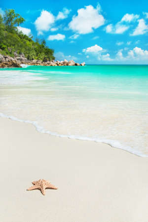 Sea star at tropical beach Anse Georgette at island Praslin, Seychelles - vacation background