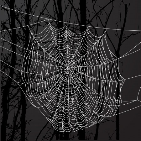 Realistic spider web over black background with tree.