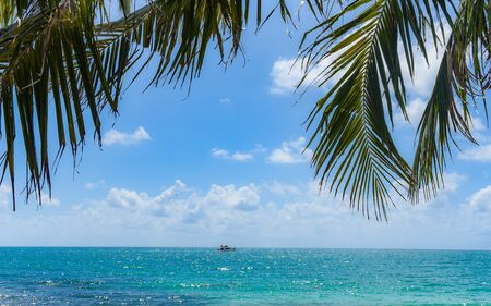 Photo for Tropical coconut leaf palm tree on the beach with sun light on blue sky sea and ocean cloud and tourist boat background / Summer vacation sea and nature travel adventure  - Royalty Free Image