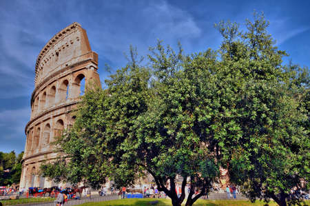 The Colosseum of Rome with an olive tree in front