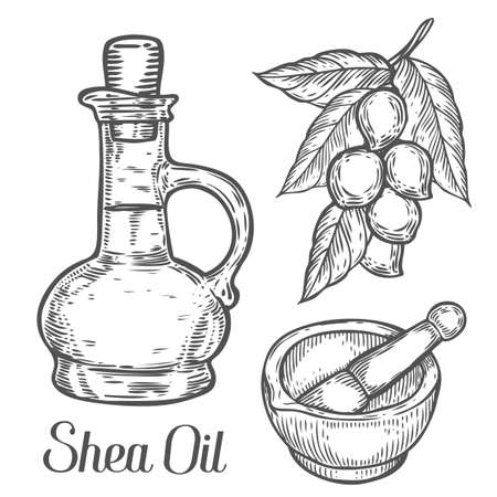 Illustration pour Shea oil bottle nuts plant, berry, fruit natural organic butter ingredient. Hand drawn vector sketch engraved illustration. Black Shea nuts isolated on white. Treatment, care, food ingredient - image libre de droit