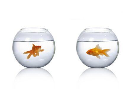 Photo pour Two round aquarium with goldfish isolated on a white background. - image libre de droit