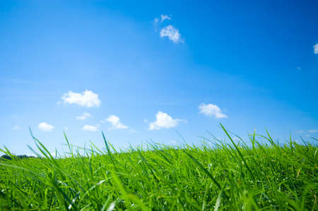 fresh green grass with bright blue sky background