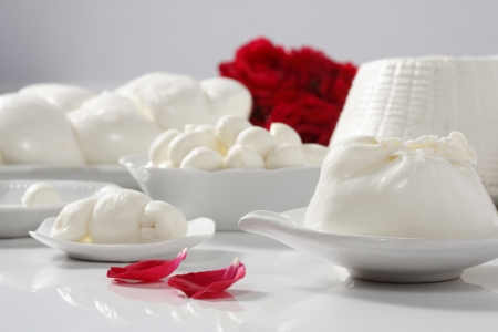 various kinds of italian cheese (mozzarella, nodino, burrata, treccia, ricotta) and roses on background
