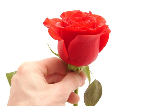 Rose and arm on a white background の写真素材
