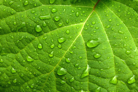 Photo pour Green leaf and water drops - image libre de droit