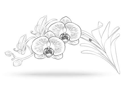Illustration pour Vector sketch of orchid flower with leaf. Floral tropical isolated on white background - image libre de droit