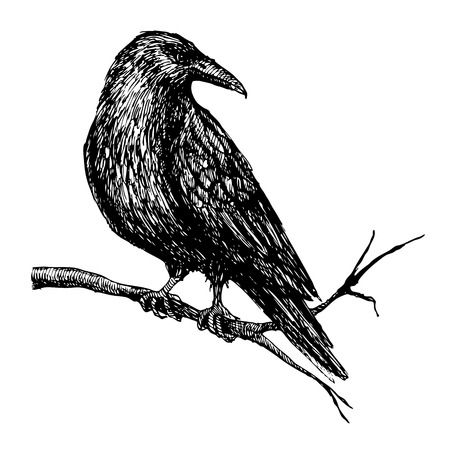 Illustration pour Vector vintage raven on tree branch. Hand drawn  illustration. - image libre de droit