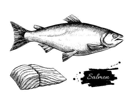 Illustration pour Vector vintage salmon drawing. Hand drawn monochrome seafood illustration. Great for menu, poster or label. - image libre de droit