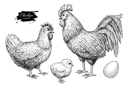 Ilustración de chicken breeding hand drawn set. Engraved Chicken, Roster, baby chick and egg illustrations. Rural natural bird farming. Poultry business. - Imagen libre de derechos