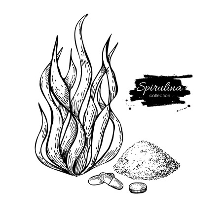 Illustration pour Spirulina seaweed powder hand drawn vector. Isolated Spirulina algae, powder and pills drawing on white background. Superfood engraved style illustration. Organic healthy food sketch - image libre de droit