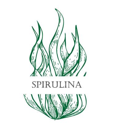 Illustration pour Spirulina algae hand drawn vector. Isolated Spirulina algae label on white background. Superfood engraved style illustration. Organic healthy food sketch - image libre de droit