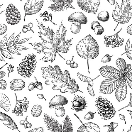 Illustration pour Autumn seamless vector pattern with leaves, berries, fir cones, nuts, mushrooms and acorns. Detailed forest botanical background. Vintage fall seasonal decor. Oak, maple, chestnut leaf drawing. - image libre de droit