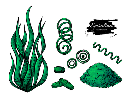 Illustration pour Spirulina seaweed powder hand drawn vector. Isolated Spirulina algae, powder and pills drawing on white background. Superfood artistic style illustration. Organic healthy food sketch - image libre de droit