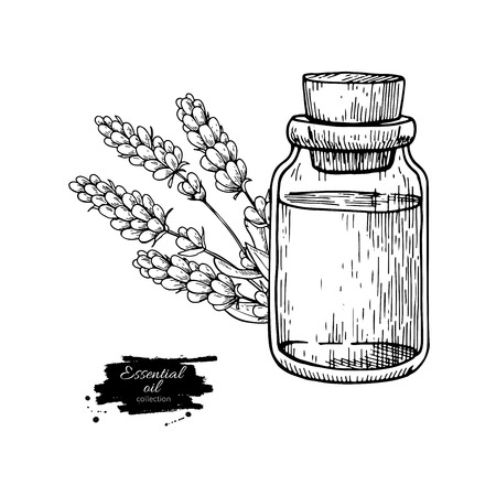24bf15078acc Lavander essential oil bottle and bunch of flowers hand drawn vector ...