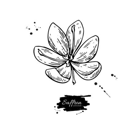 Illustration pour Saffron flower vector drawing. Hand drawn herb and food spice. - image libre de droit