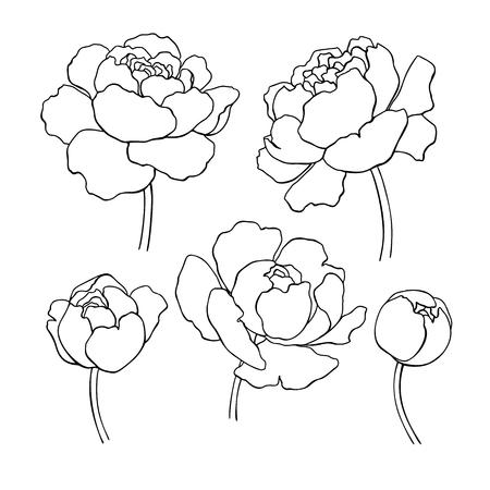 Illustration pour Peony line drawing. Vector hand drawn outline flower set. - image libre de droit