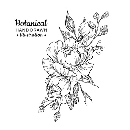 Illustration for Vintage flower bouquet. Vector drawing. Peony, rose, leaves and berry sketch. Engraved botanical composition. Hand drawn floral wedding invitation, label template, anniversary card. - Royalty Free Image