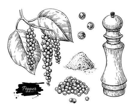 Illustration for Black pepper vector drawing set. Peppercorn heap, mill, dryed seed, plant, grounded powder. - Royalty Free Image