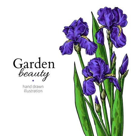 Ilustración de Iris bouquet. Flower and leaves drawing. Vector hand drawn floral set. Garden bloom - Imagen libre de derechos