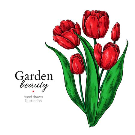 Illustration pour Tulip flower and leaves bouquet drawing Vector hand drawn floral illustration. - image libre de droit